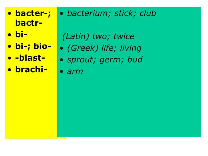 bacter-; bactr-