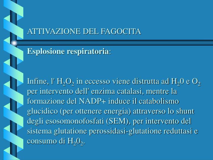ATTIVAZIONE DEL FAGOCITA