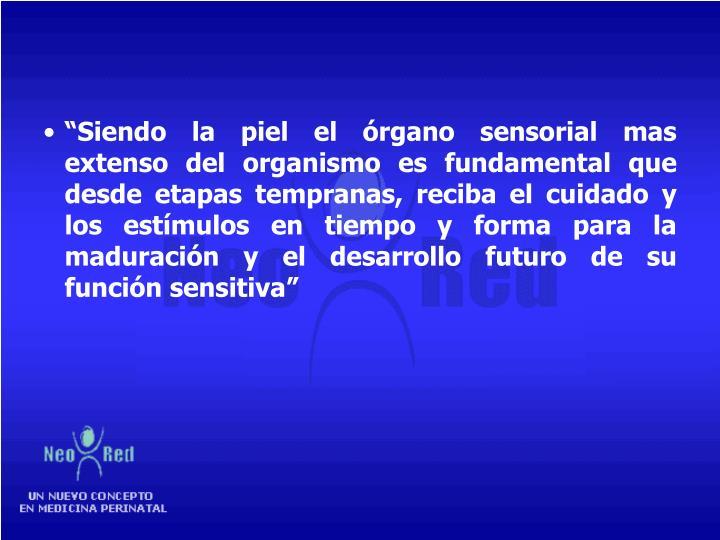 """""""Siendo la piel el órgano sensorial mas extenso del organismo es fundamental que desde etapas tempranas, reciba el cuidado y los estímulos en tiempo y forma para la maduración y el desarrollo futuro de su función sensitiva"""""""