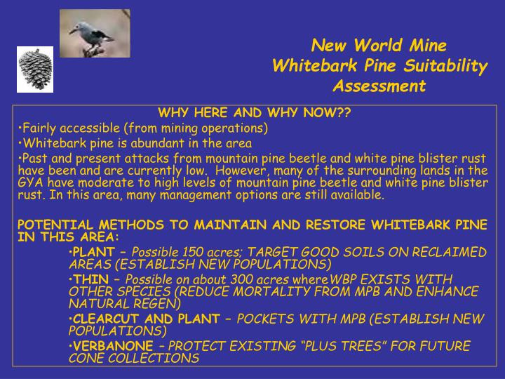 New World Mine Whitebark Pine Suitability Assessment