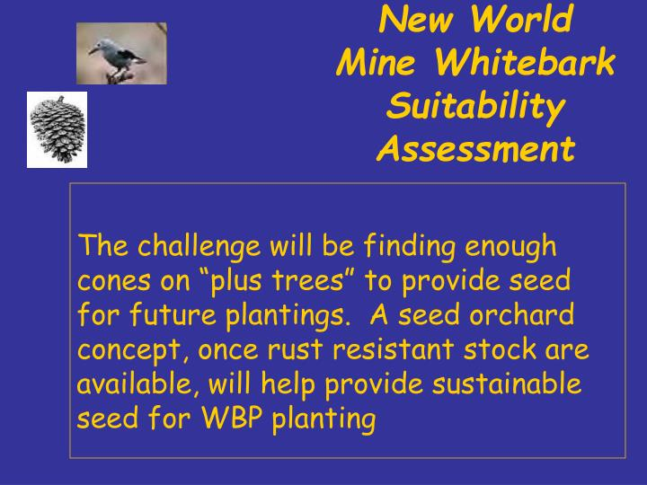 New World Mine Whitebark Suitability Assessment