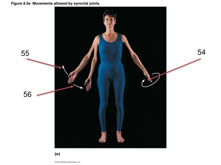 Figure 8.5e  Movements allowed by synovial joints.