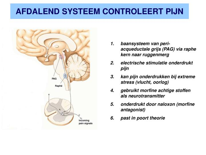 AFDALEND SYSTEEM CONTROLEERT PIJN