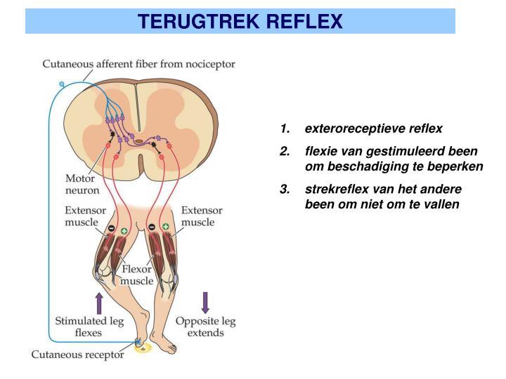 TERUGTREK REFLEX
