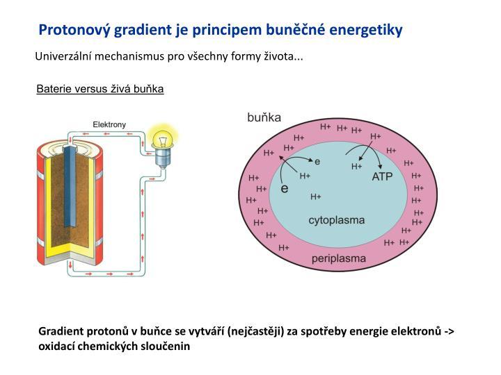 Protonov