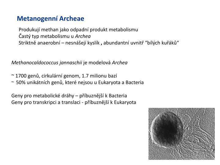 Metanogenní Archeae