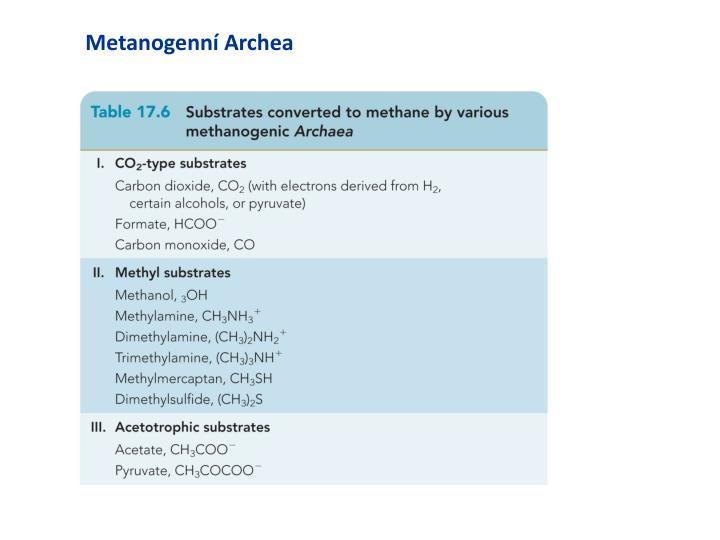 Metanogenní Archea