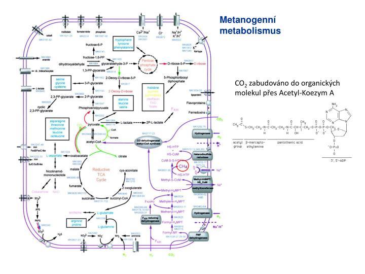 Metanogenní