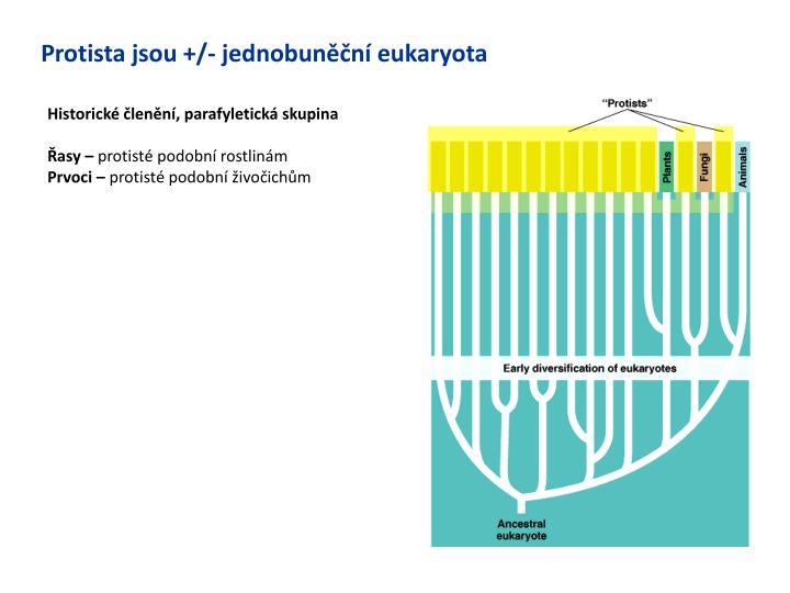 Protista jsou +/- jednobuněční eukaryota
