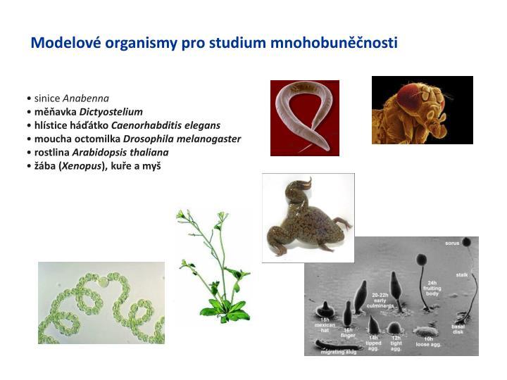 Modelové organismy pro studium mnohobuněčnosti