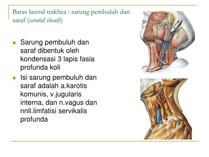 Sarung pembuluh dan saraf