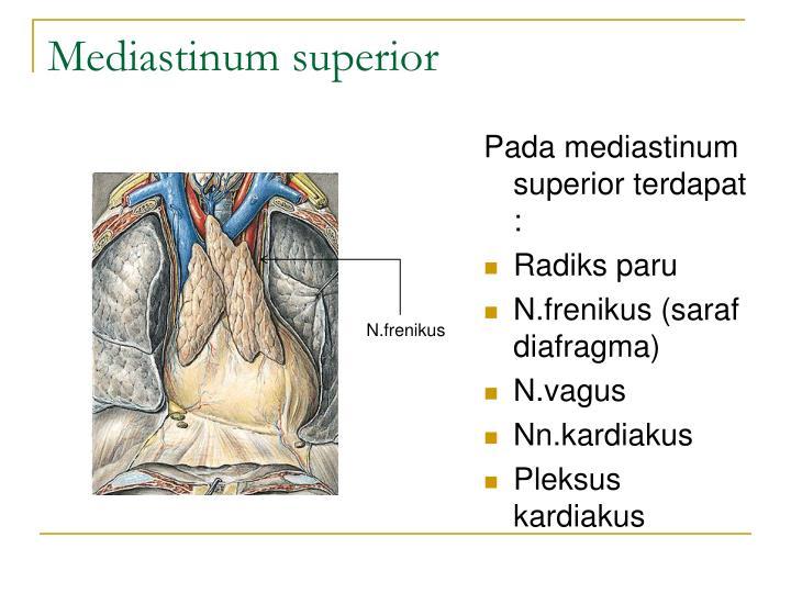 Mediastinum superior