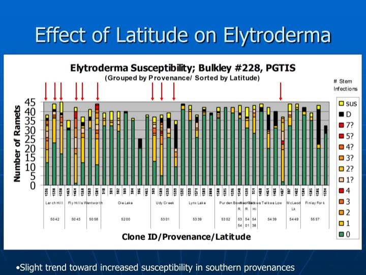 Effect of Latitude on Elytroderma