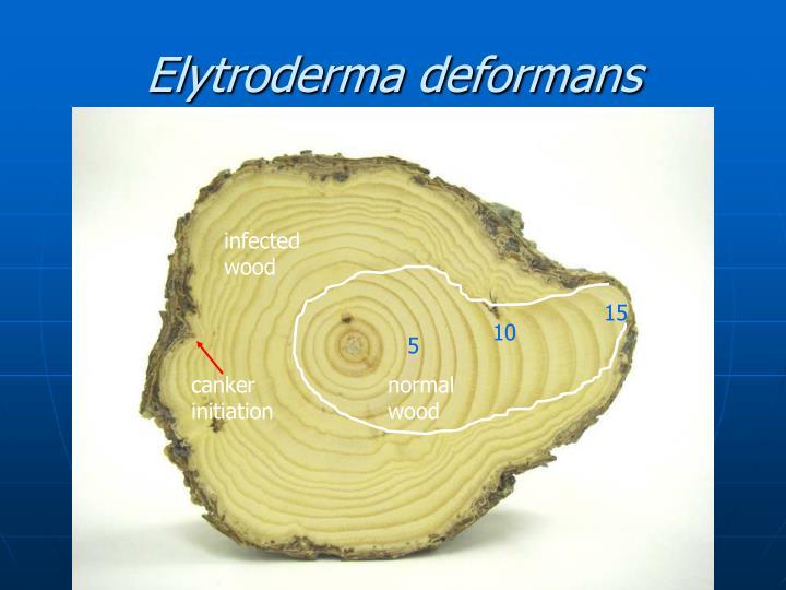Elytroderma deformans