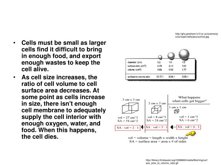 http://ghs.gresham.k12.or.us/science/ps/sci/soph/cells/pics/surfvol.jpg