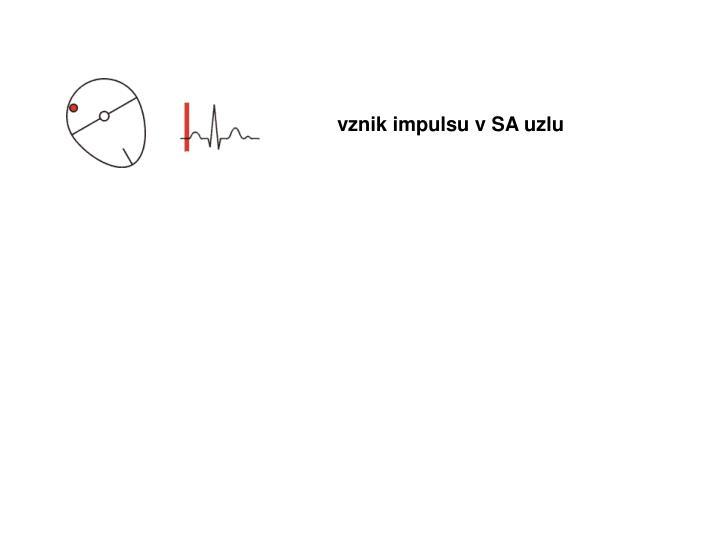 vznik impulsu v SA uzlu