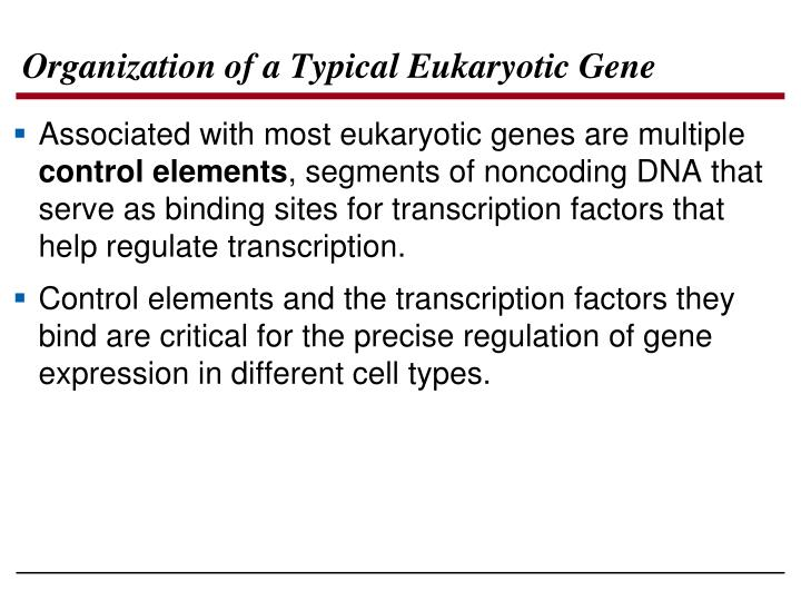 Organization of a Typical Eukaryotic Gene