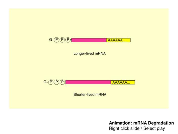 Animation: mRNA Degradation