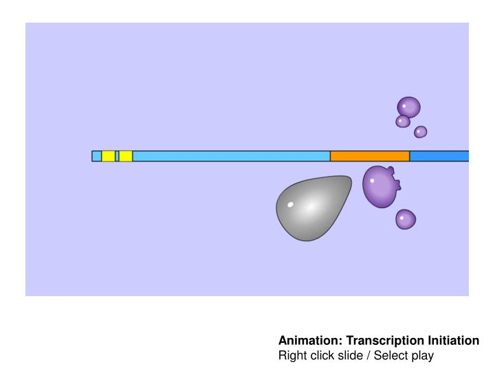 Animation: Transcription Initiation
