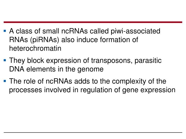 A class of small ncRNAs called piwi-associated RNAs (piRNAs) also induce formation of heterochromatin