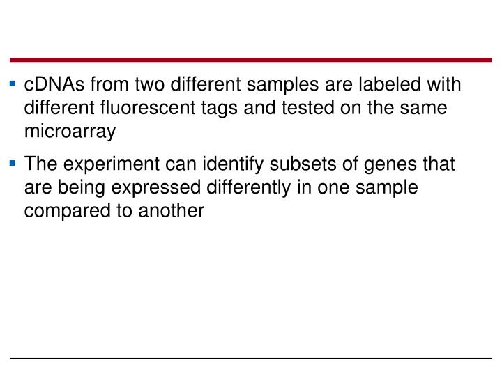 cDNAs from two different samples are labeled with different fluorescent tags and tested on the same microarray