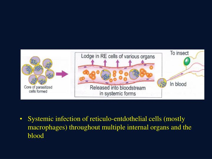 Systemic infection of reticulo-entdothelial cells (mostly macrophages) throughout multiple internal organs and the blood