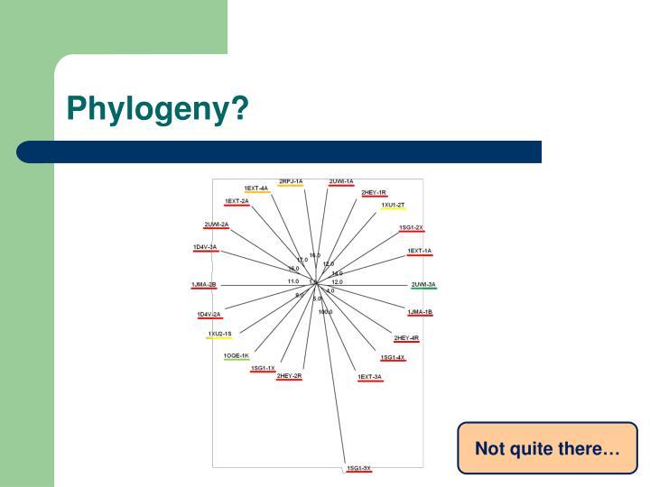 Phylogeny?