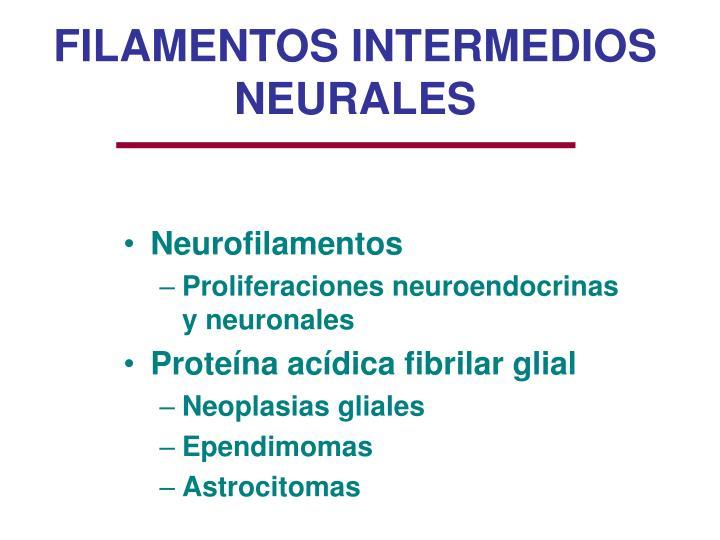 FILAMENTOS INTERMEDIOS NEURALES