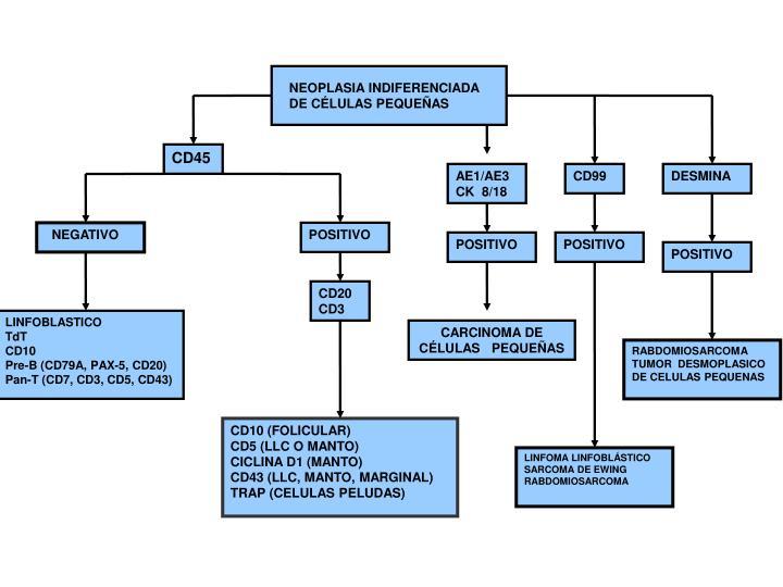 NEOPLASIA INDIFERENCIADA DE CÉLULAS PEQUEÑAS