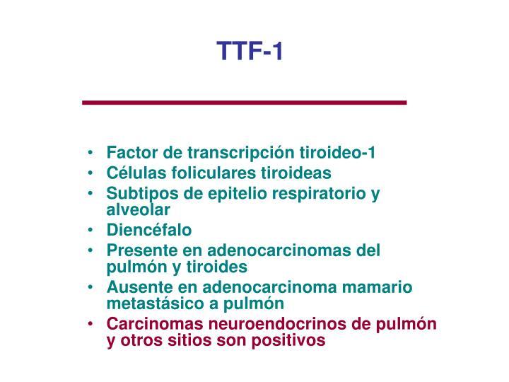 TTF-1