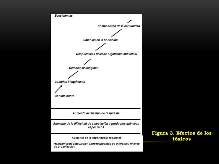 Figura 3. Efectos de los tóxicos