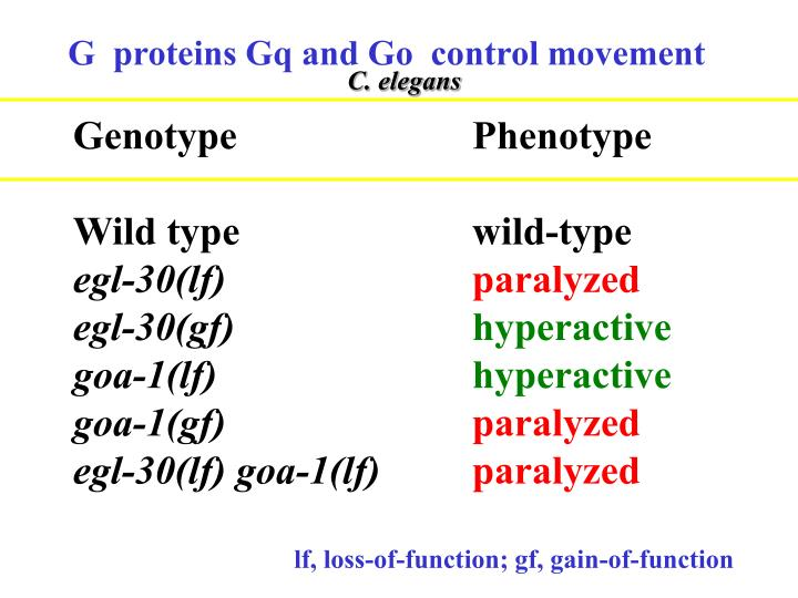 G  proteins Gq and Go  control movement