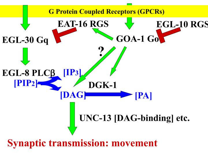 G Protein Coupled Receptors (GPCRs)