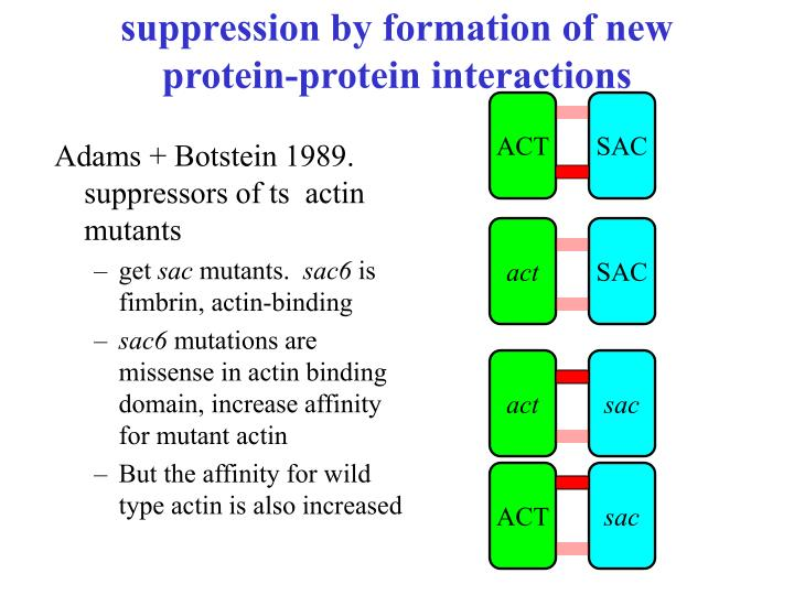 suppression by formation of new protein-protein interactions