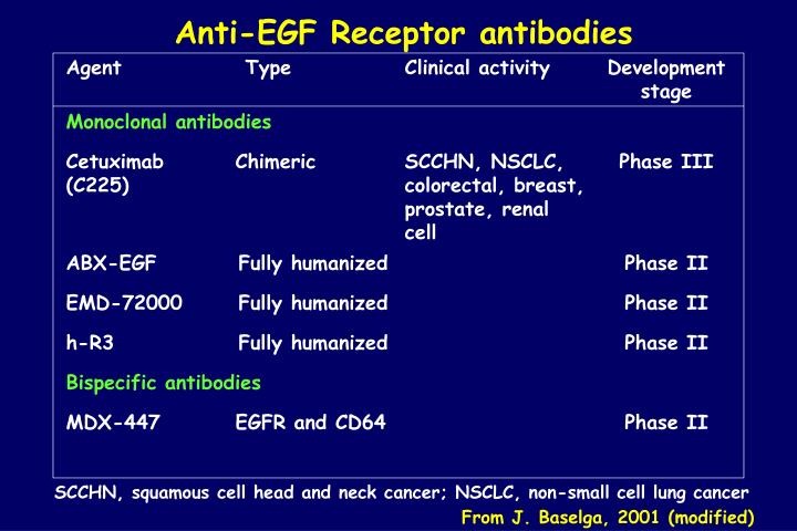 Anti-EGF Receptor antibodies