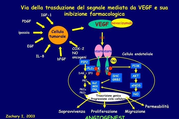Via della trasduzione del segnale mediata da VEGF e sua inibizione farmacologica