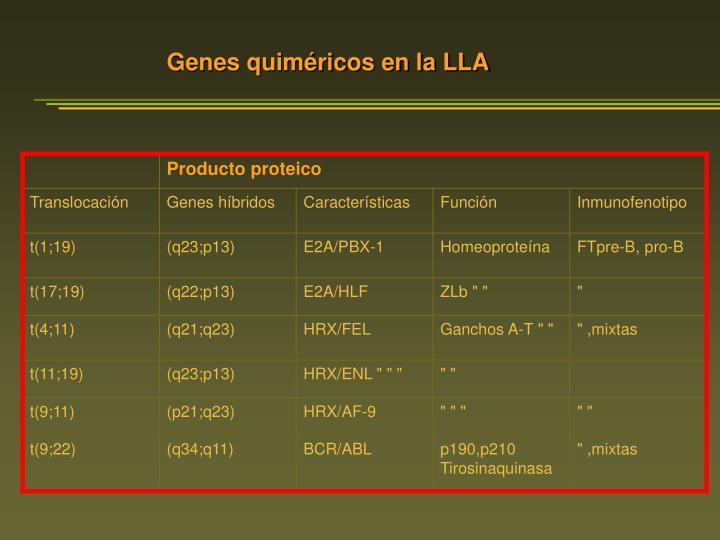 Genes quiméricos en la LLA