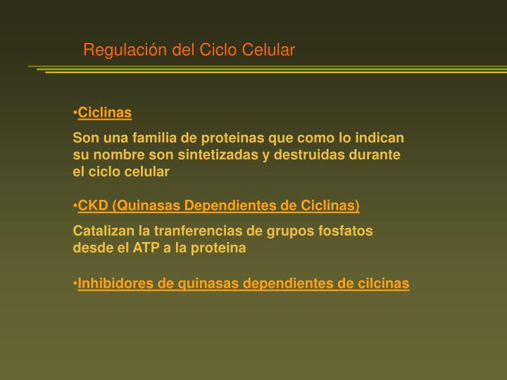 Regulación del Ciclo Celular