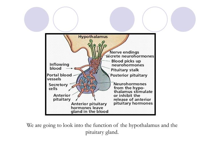 We are going to look into the function of the hypothalamus and the pituitary gland.