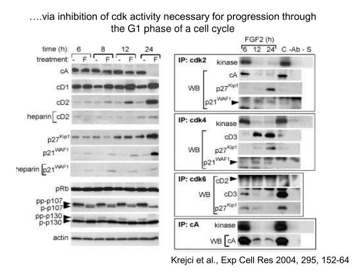 ….via inhibition of cdk activity necessary for progression through the G1 phase of a cell cycle