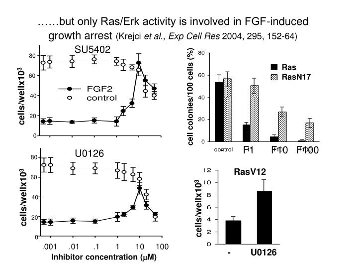 ……but only Ras/Erk activity is involved in FGF-induced growth arrest