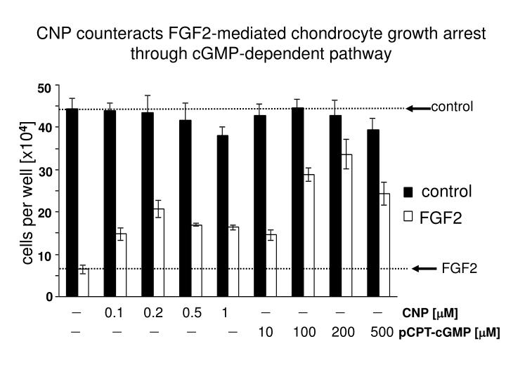 CNP counteracts FGF2-mediated chondrocyte growth arrest through cGMP-dependent pathway
