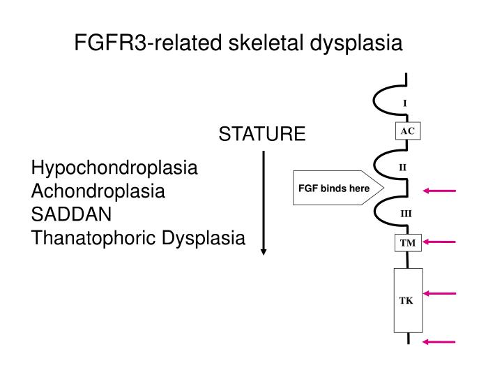 FGFR3-related skeletal dysplasia