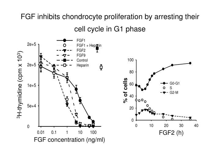 FGF inhibit