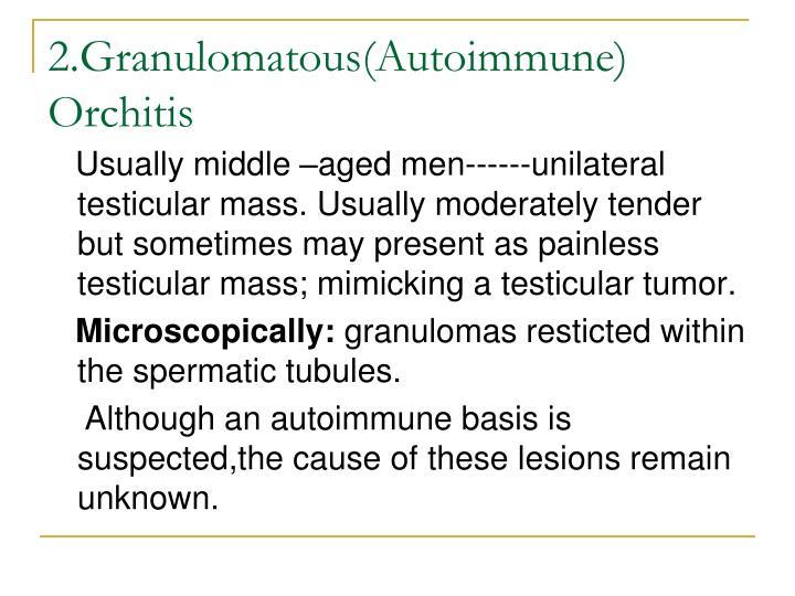 2.Granulomatous(Autoimmune) Orchitis