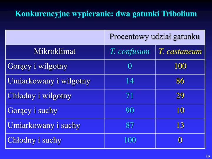 Konkurencyjne wypieranie: dwa gatunki Tribolium