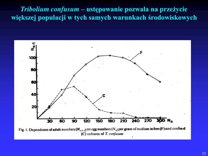 Tribolium confusum