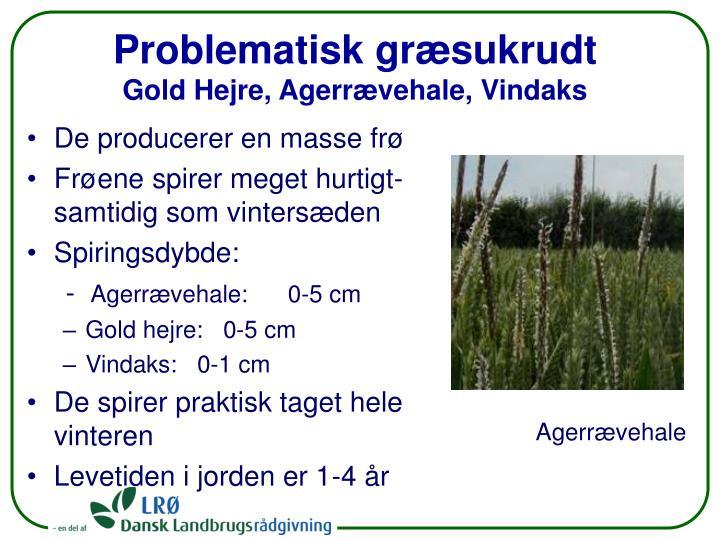 Problematisk græsukrudt