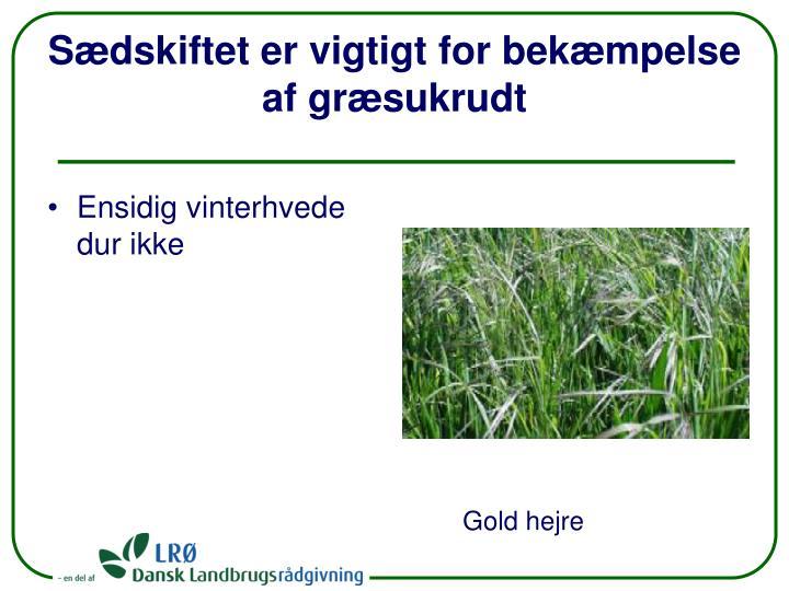 Sædskiftet er vigtigt for bekæmpelse af græsukrudt