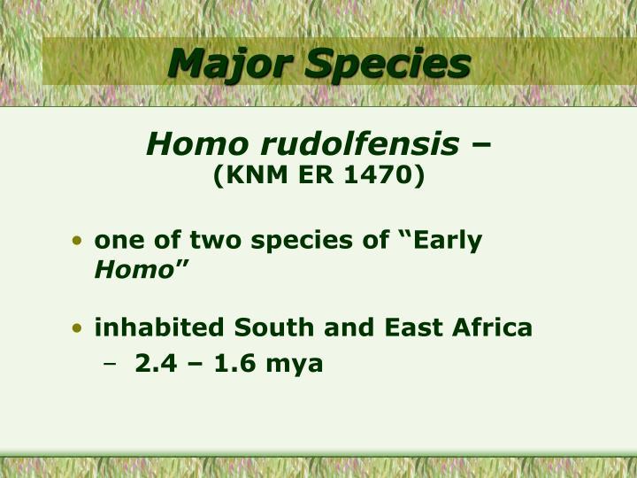 Major Species